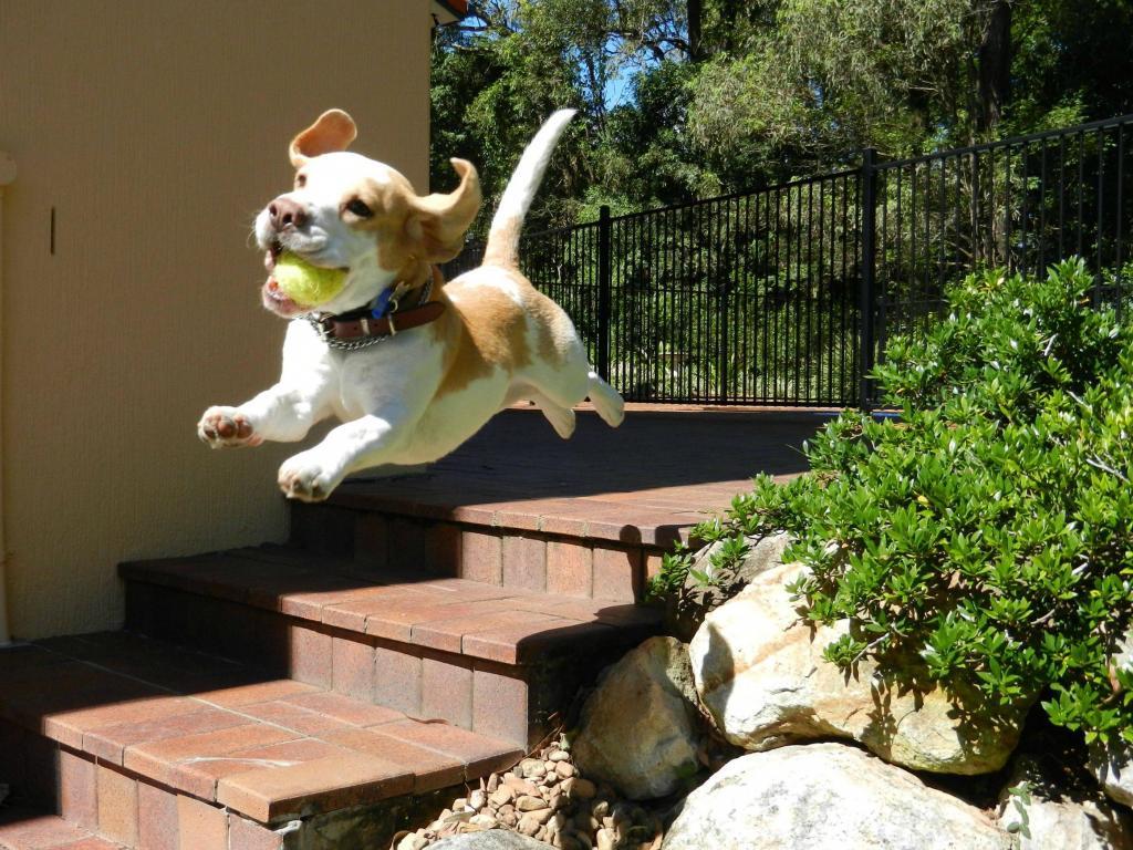 Собака не пьет воду: возможные причины и решение проблемы
