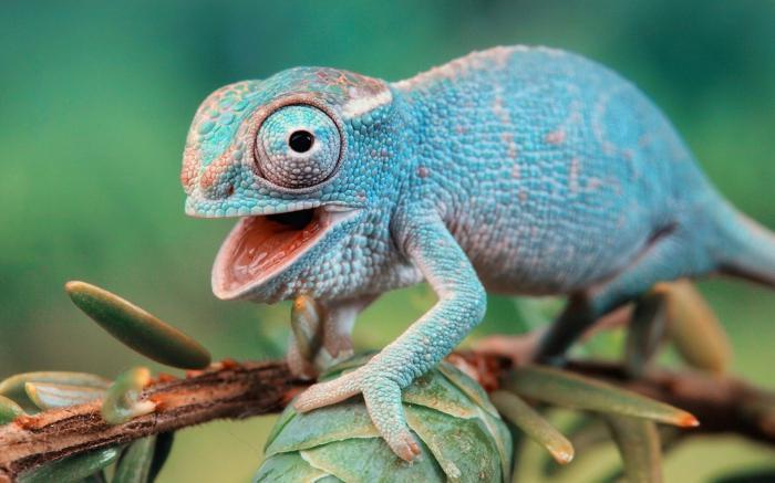 Названия пресмыкающихся животных