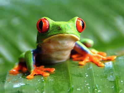 Земноводные животные: названия и фото