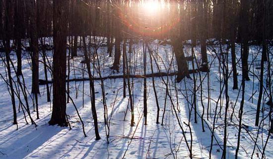 Фотосессия зимой в лесу – прекрасный способ раскрыть свой творческий потенциал