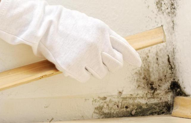 как удалить плесень и грибок со стенок в доме народные средства