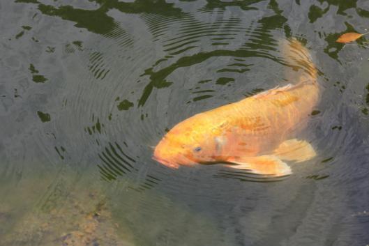 какая рыба ловится в ноябре в ялте