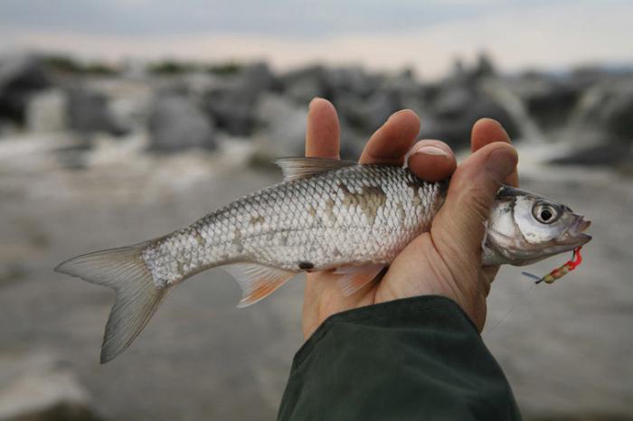какая рыба ловится в ноябре в финляндии