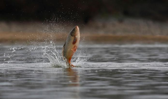 когда ловится рыба в норвегии