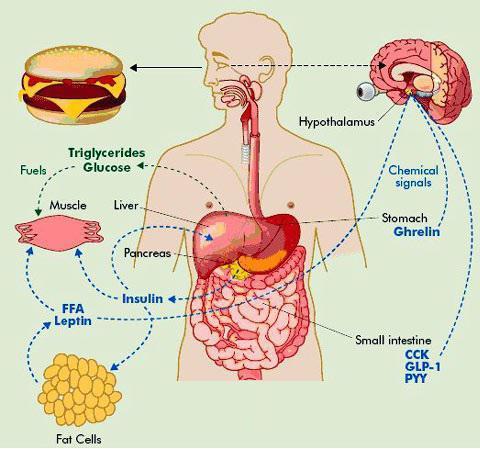 еда против паразитов в кишечнике человека