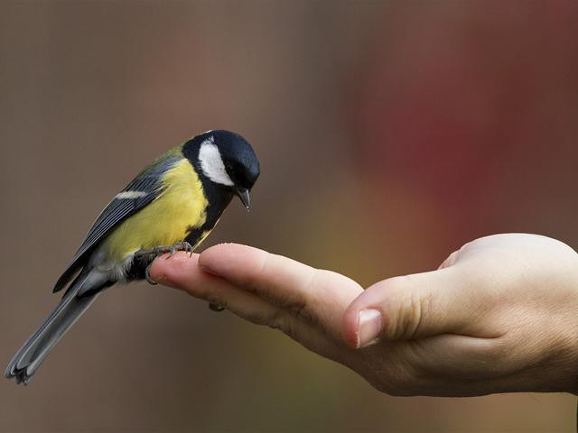 Стая птиц во сне означает возможности и перспективы.