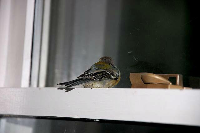 Если птица залетела в дом