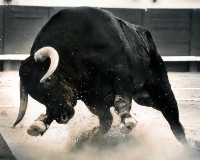 К чему снится: бык нападает с рогами, черный бык, убегать от быка