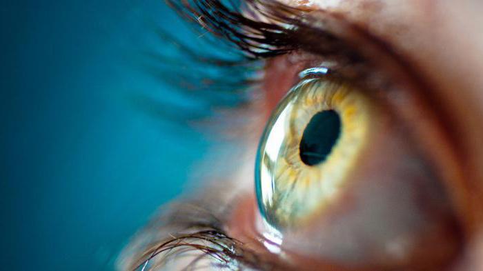 средняя оболочка глаза состоит из