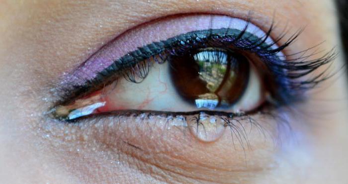 из чего состоит человеческий глаз