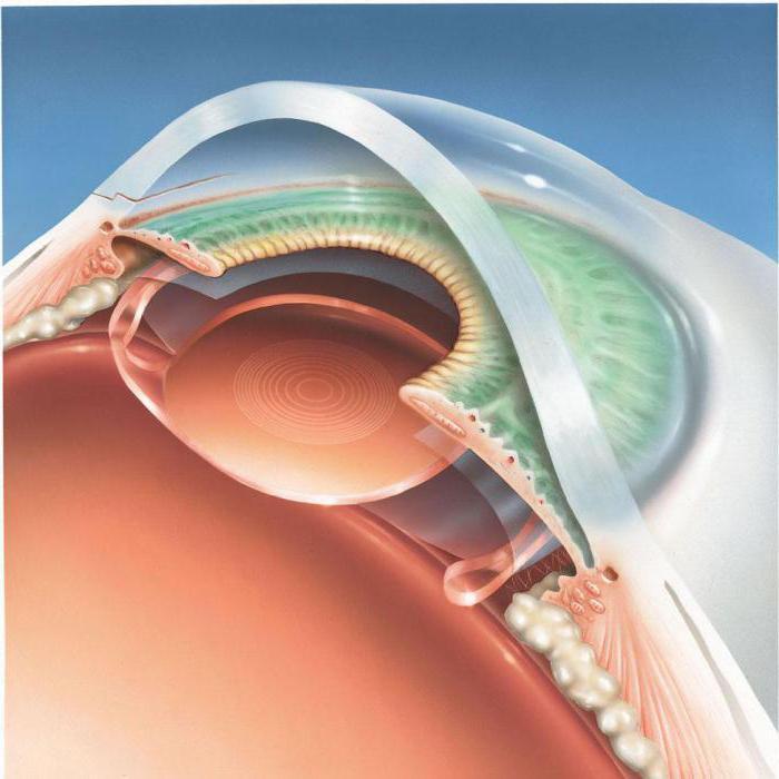 из чего состоит глаз человека