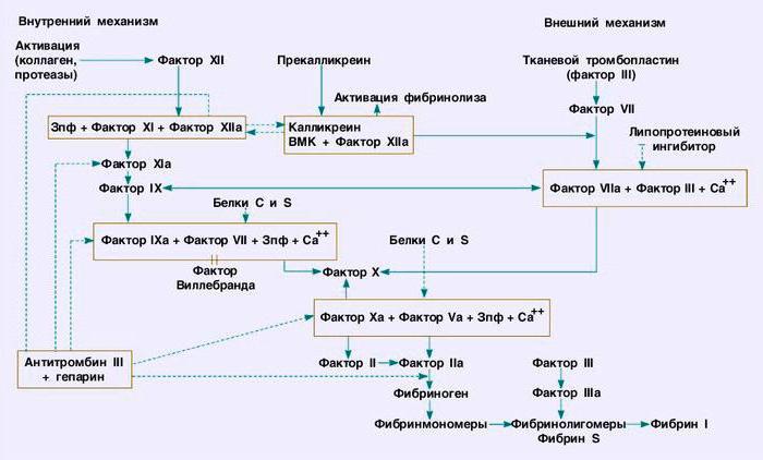 система свертывания крови схема