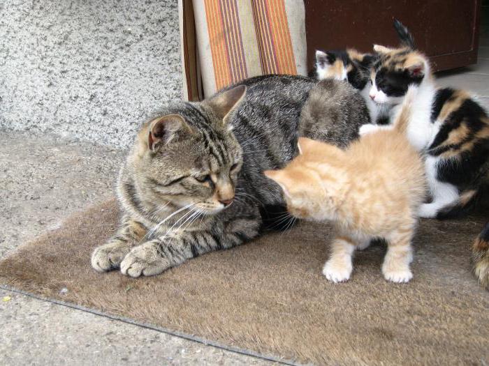 во сне кошка родила много котят