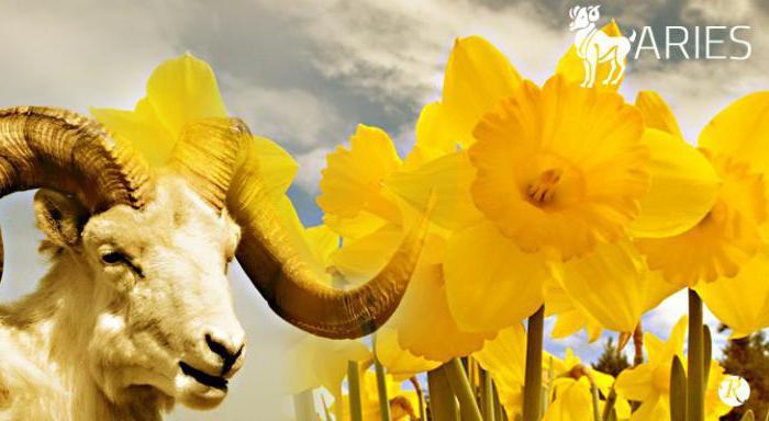 Цветы овен по гороскопу