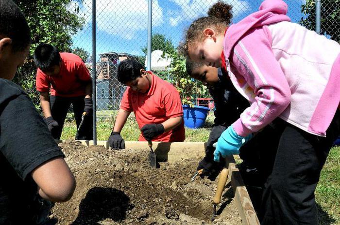 экологическое мероприятие в начальной школе по фгос