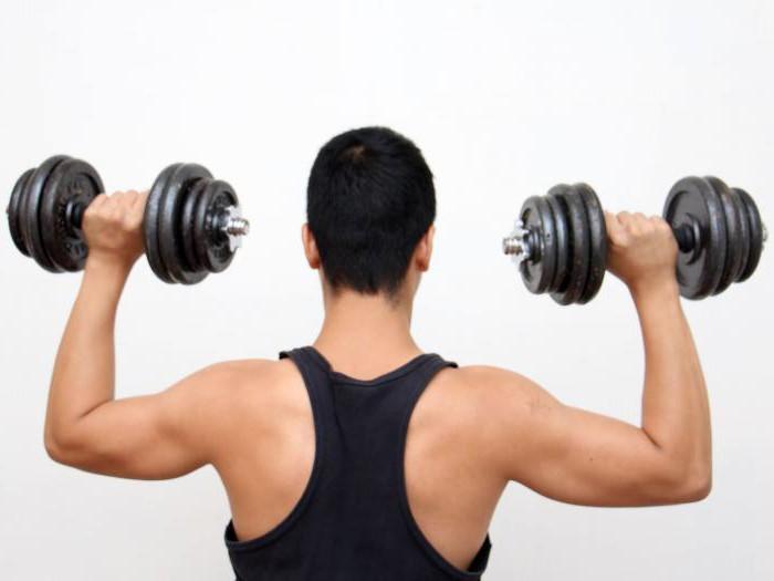 универсальные программы тренировок по тяжелой атлетике