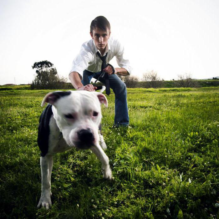 К чему снится огромная собака