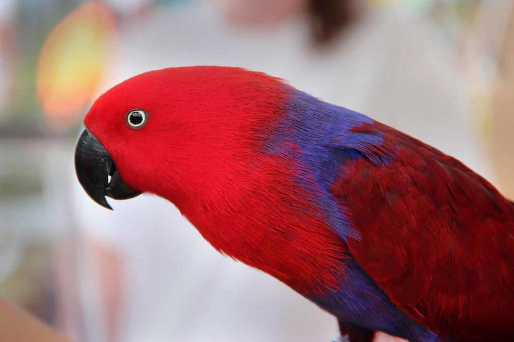 картинки попугай красный этом