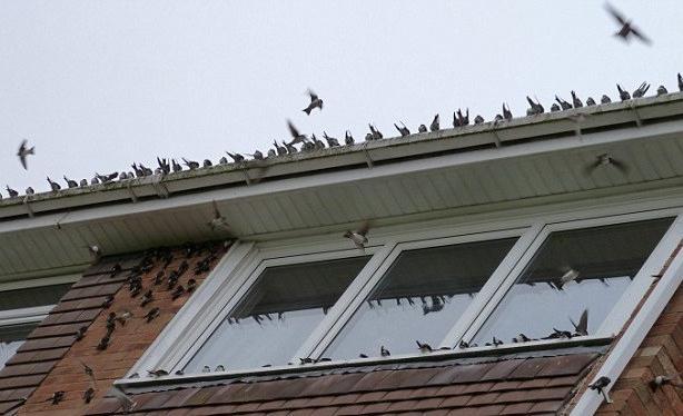 Синица залетела на балкон. примета хорошая или плохая?.