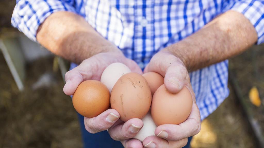к чему снится собирать яйца в курятнике