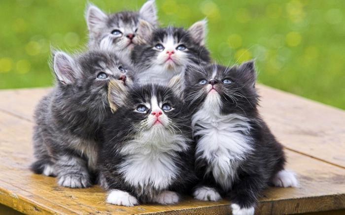 Вазелиновое масло для кошек