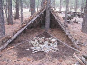 как выжить в лесу зимой без всего
