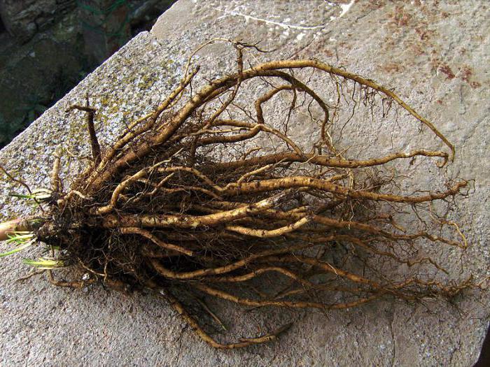 травы снижающие холестерин и очищающие сосуды