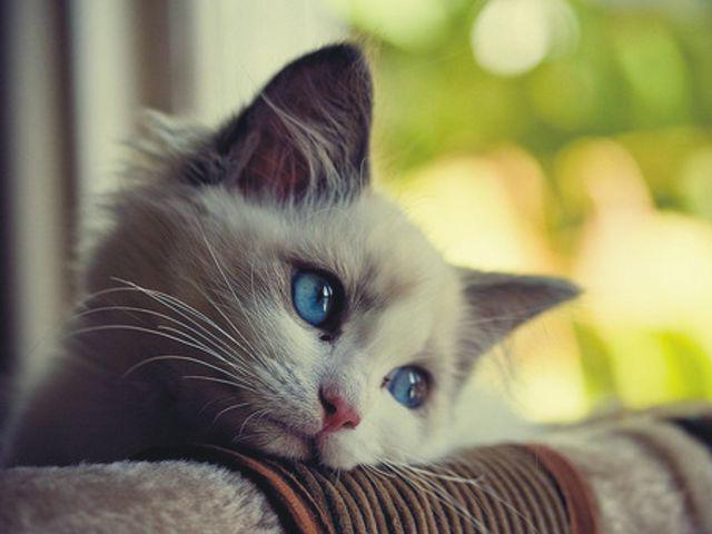 Понос у кошек причины и лечение в домашних условиях