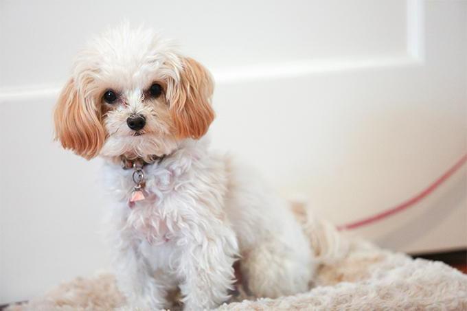у какой породы собак меньше проблем со здоровьем