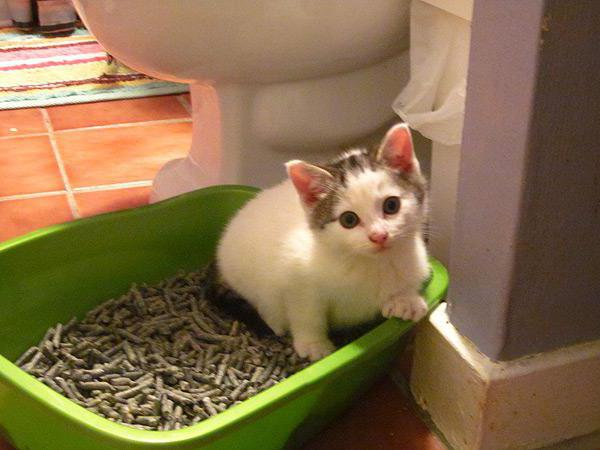 У котенка жидкий стул что делать