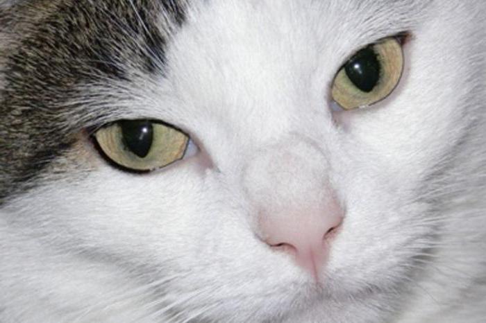 рак у кошки опасен для человека фото