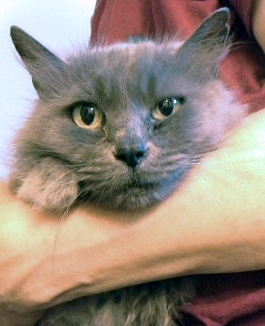рак у кошки опасен для человека