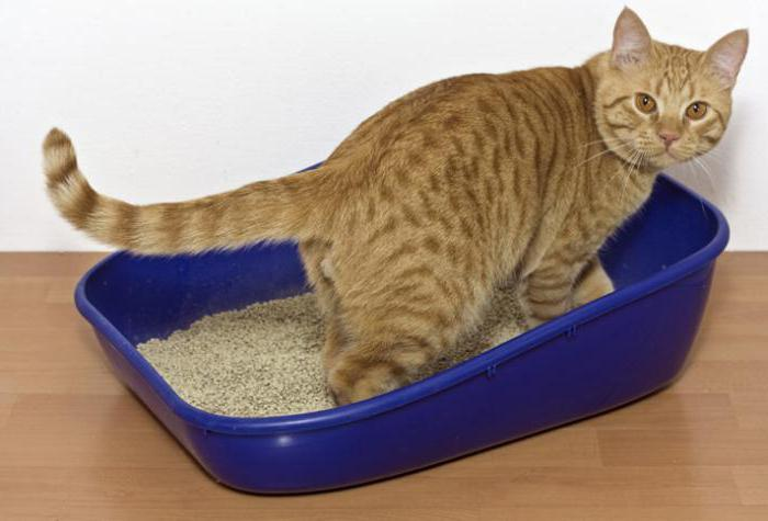 Лечение поноса у кошки в домашних условиях