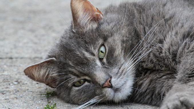 Что дать кошке от поноса