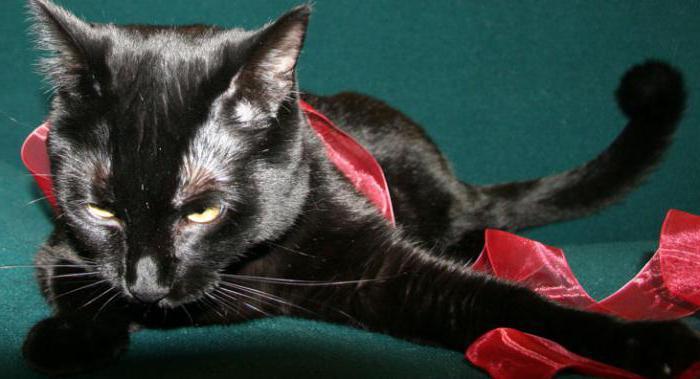 залысины у кошки на лапах