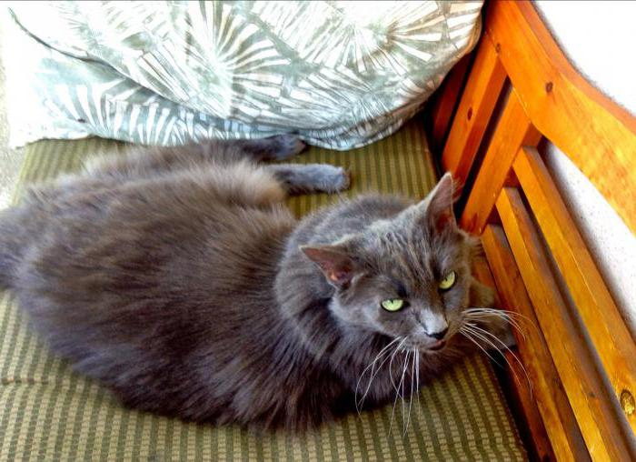 у кошки на задних лапах залысины