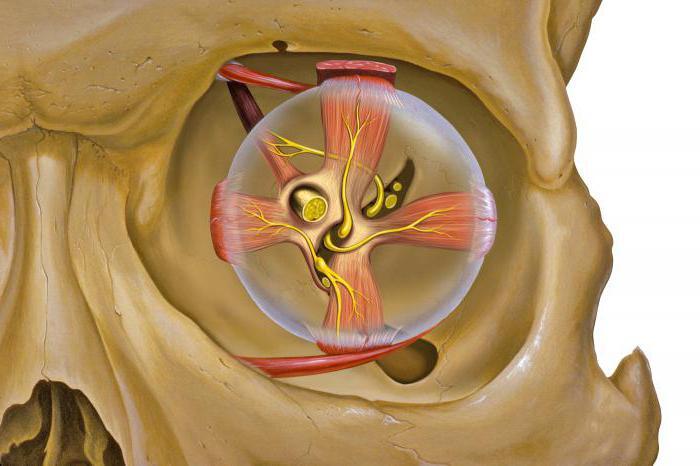 орбитальной кости