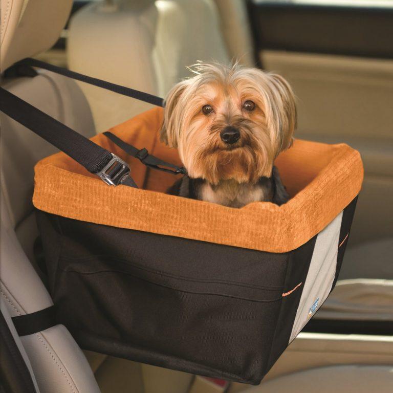 правила перевозки собак в машине