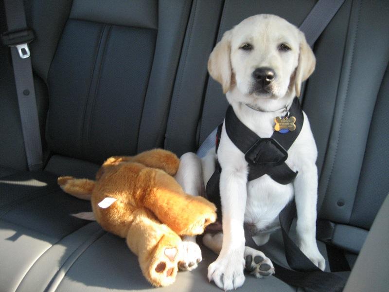 ремень безопасности для собак в автомобиль