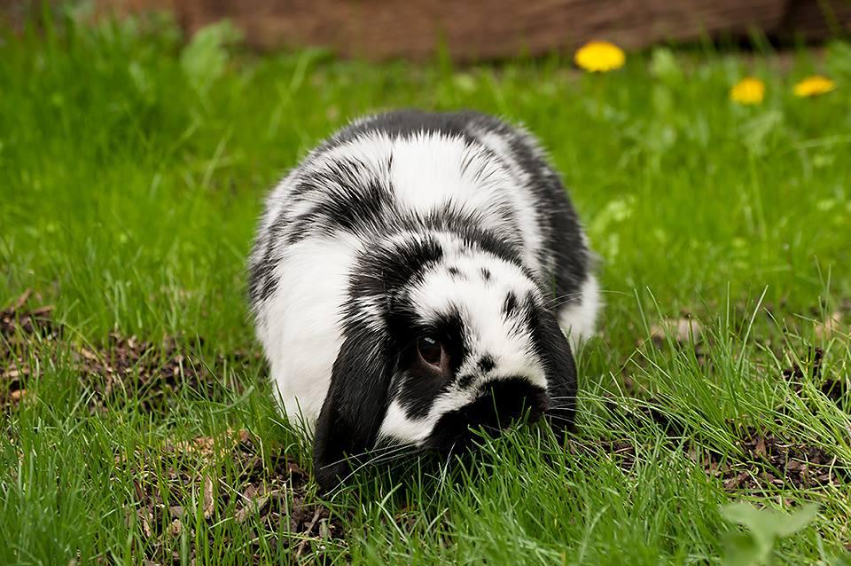 можно ли кормить декоративного кролика семечками