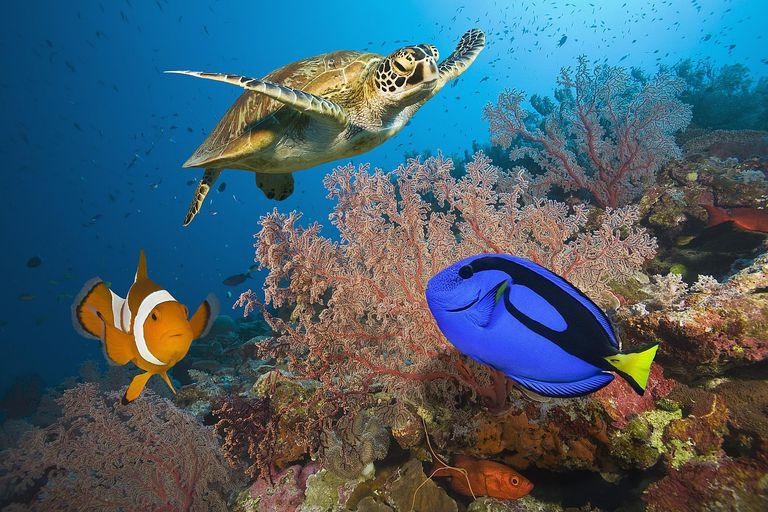 как известно, морские животные австралии картинки вместо гравия красуются