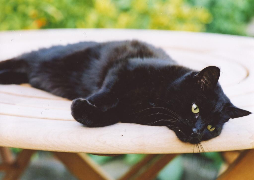 терминальная стадия хпн у кошки