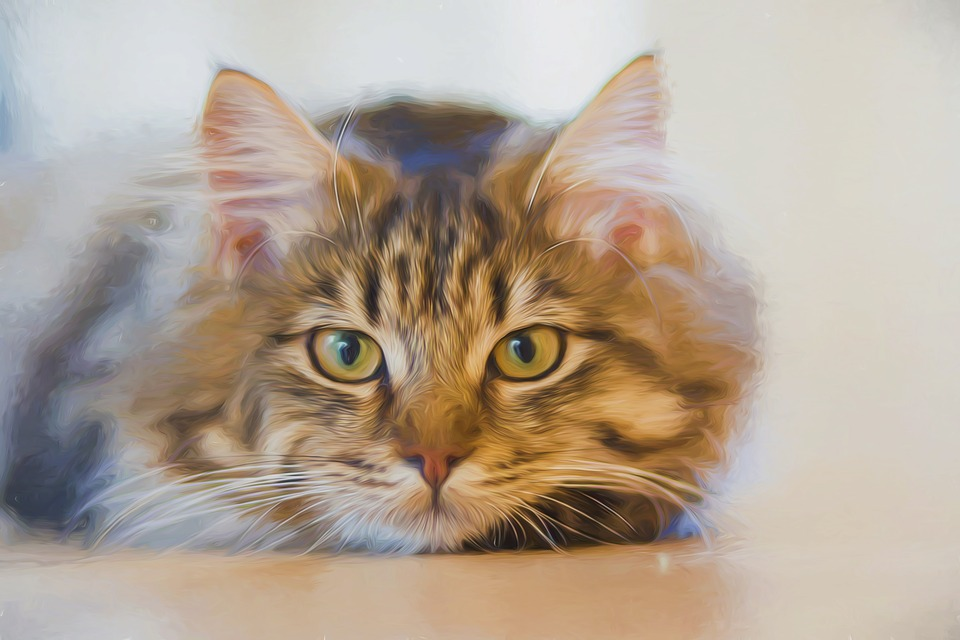 можно кошкам давать рыбий жир