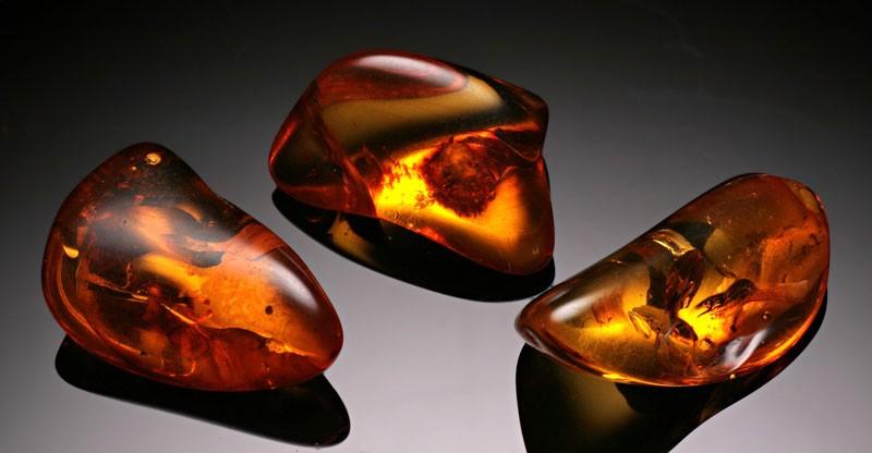 Как образовался янтарь: происхождение, свойства и характеристика, интересные факты