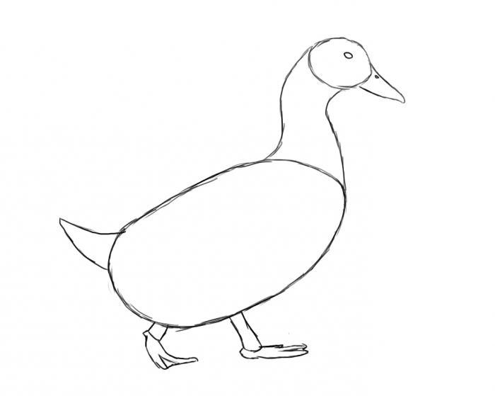 Картинки утки как нарисовать