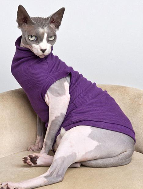 Купить Котов и кошек тильд в интернет магазине на Ярмарке 14