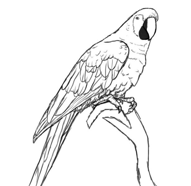 как нарисовать птицу поэтапно