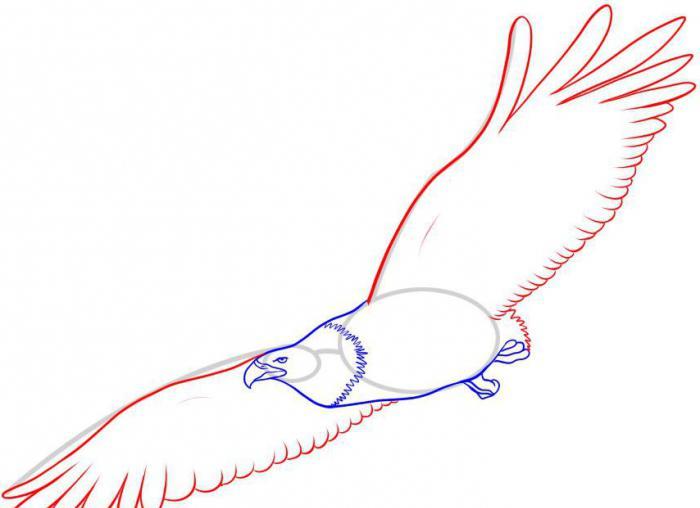 как нарисовать карандашом птицу поэтапно