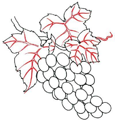 как нарисовать виноград карандашом