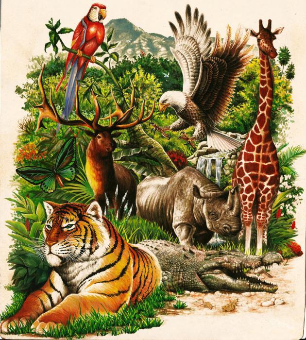 Растительный и животный мир картинки для детей